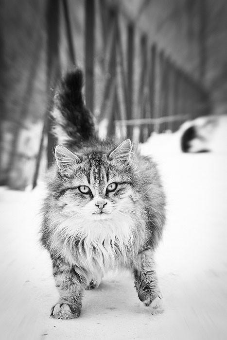 позитивные коты
