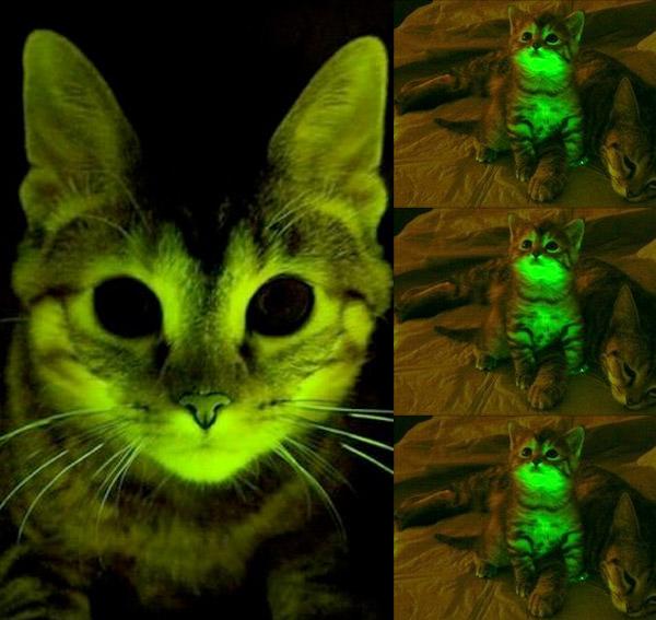 Светящиеся в темноте котята
