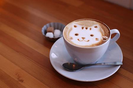 рисунок на кофе кот