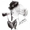 черно-белые аватары аниме