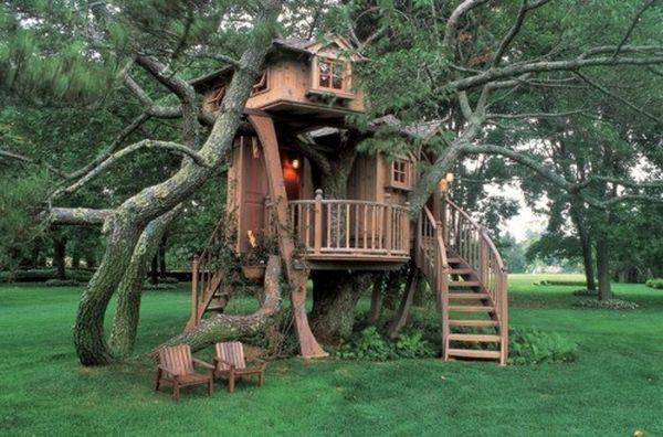 с высокой ветки дерева.