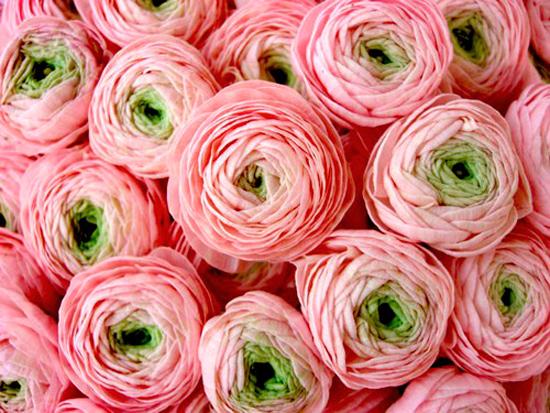 цветы оригинальные идеи