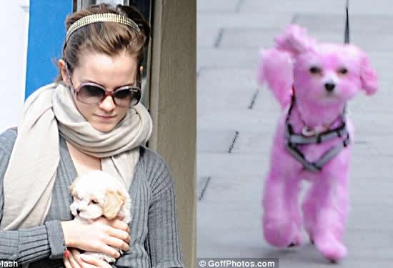 Эмма Уотсон с розовой собачкой