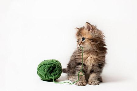 котенок Дейзи фото