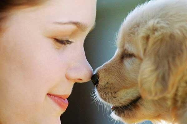 как собаки влияют на людей