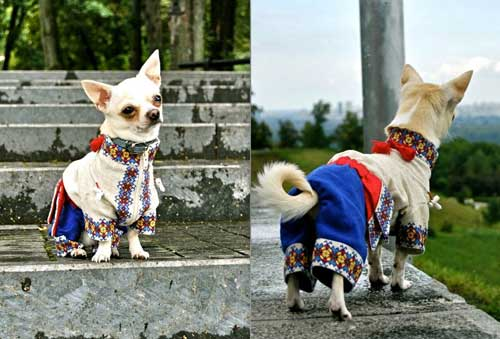 мода на украинскую вышивку