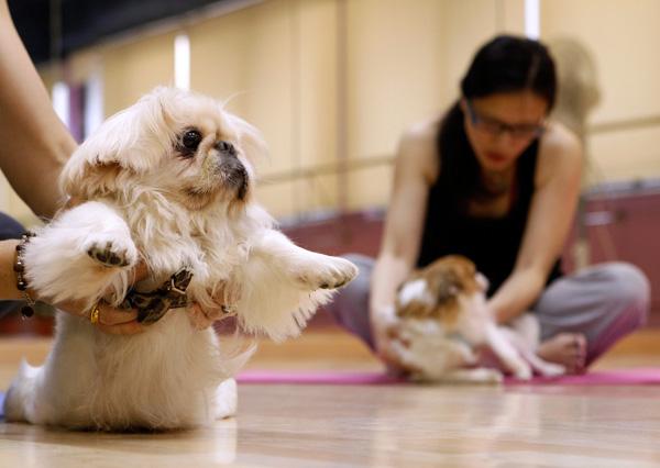 дога - йога для собак