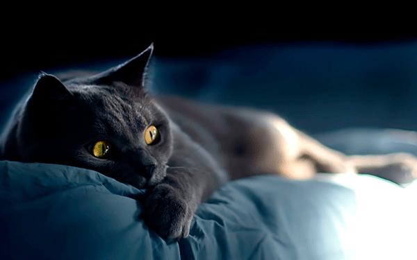есть ли у кошек совесть
