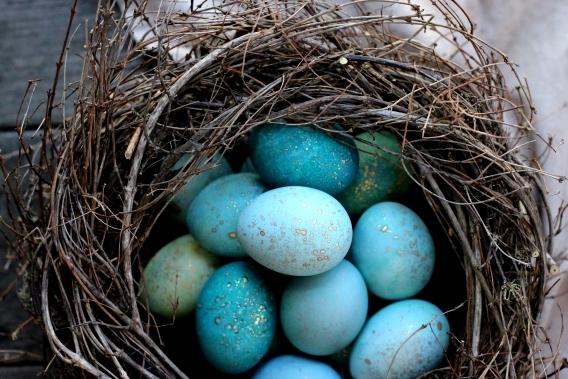 покрасить яйца синей капустой