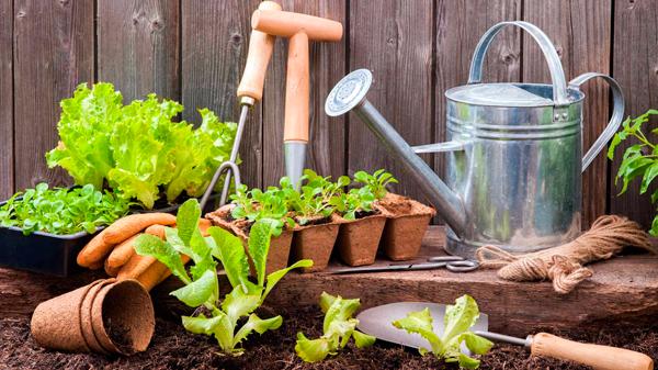 польза огородничества для здоровья